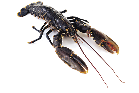 Connemara Products Live Lobster