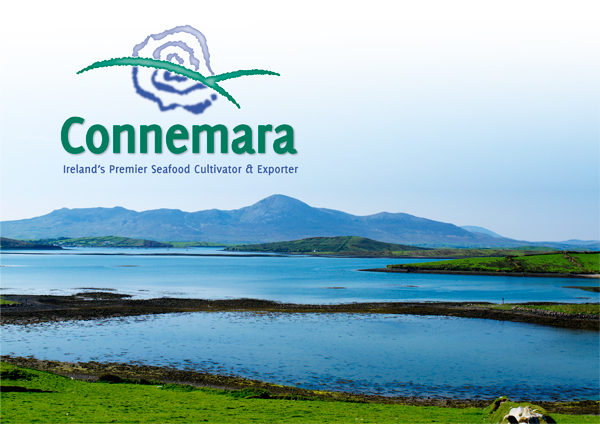 Connemara Landscape 600px