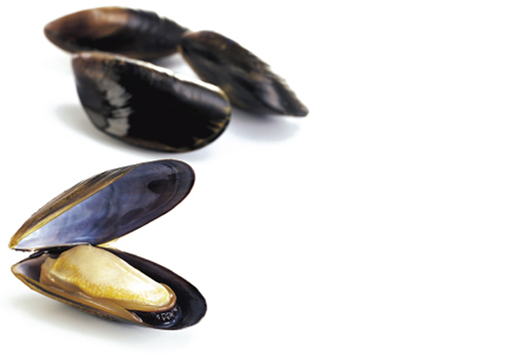 Connemara Products Live Mussels