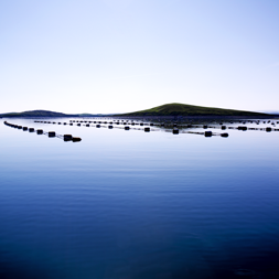 Mussel Farm Clew Bay 119