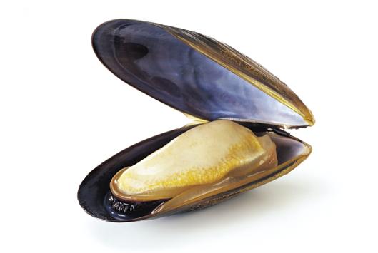 Connemara Irish Mussel